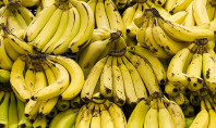 Will Bananas Go Extinct?