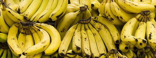 Will Bananas Go Extinct?