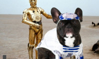 Star Wars French Bulldog Helps You Start 2016 Right