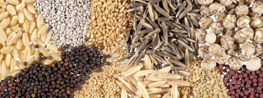 8 Health Benefits of Eating Raw Seeds