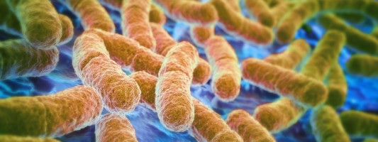 The Wonderful World of Gut Bacteria