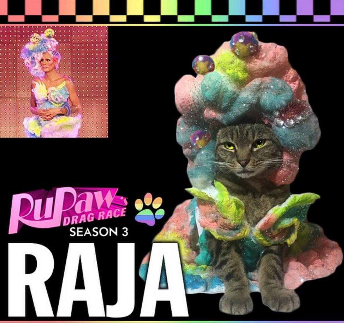 rupaws drag race