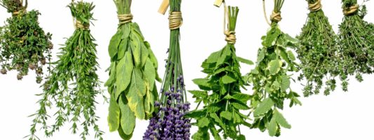 9 Unusual Herbs for Healing