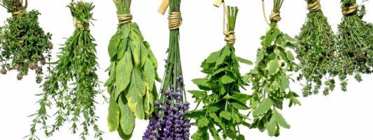 9 Unusual Herbs for Healing