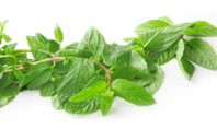 9 Anticancer Herbs to Try Now