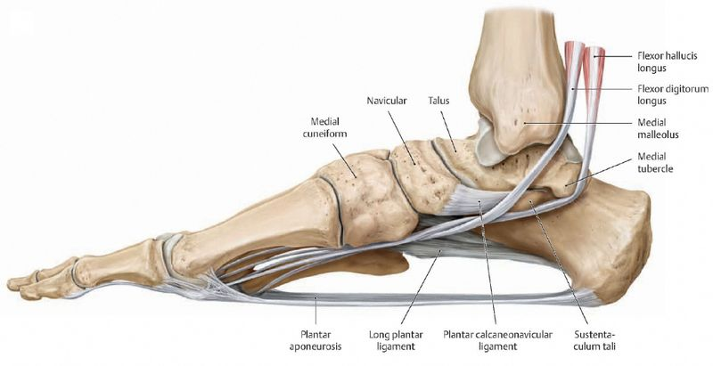 MCL Injury: What to Know