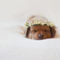 Forget Human Babies, Newborn Puppy Photography is Everything