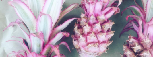 Pink Pineapples Exist, Obviously Your Drinks Need Them