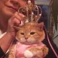 This Cat Quinceanera Will Complete Your Life
