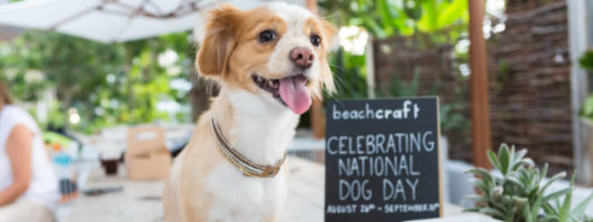 16 Dog Friendly Hotels to Celebrate National Dog Day At
