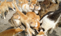 Aoshima Island is Heaven for Cat Lovers