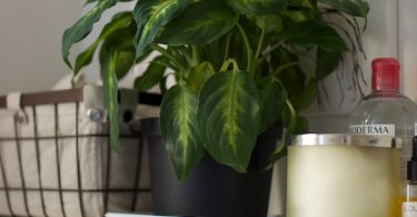 The best bathroom plants to keep you happy and healthy