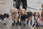 walkee paws dog leggings