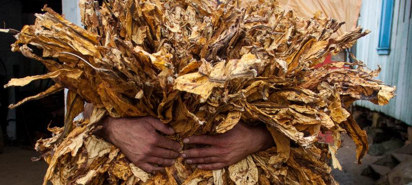 vaginal tobacco
